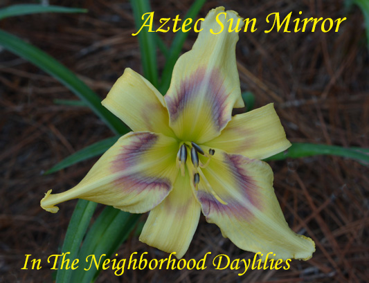 Aztec Sun Mirror  (Hansen, D.,  2012)-Daylily;Day Lily;Daylilies;CLICK OF IMAGE TO ENLARGE;Daylilies For Sale;Daylily Aztec Sun Mirror;D.Hansen 2012 Daylily;Complex Eye Of Cerise, Band Of Lavender, Violet Veins, & Yellow Petaloids w' Yellow Throat;Extra Early Blooming Daylily;Reblooming Daylilies;Perennials