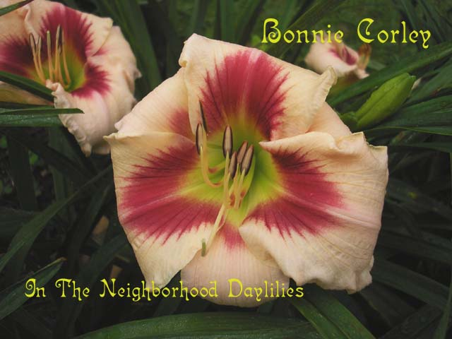 Bonnie Corley (Hendricks, W., 1992)-Daylily;Daylilies;Day Lily;Daylillies;CLICK IMAGE TO ENLARGE;Daylily Bonnie Corley;Hendricks Daylily;Pink w' Cherry Red Eye Daylily;Award Winning Daylily;Fragrant Daylilies;Early To Midseason Daylily;Evergreen Daylily