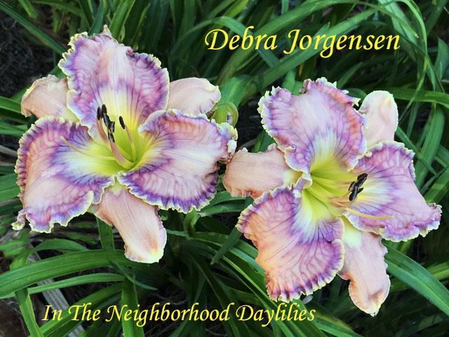 Debra Jorgensen  (Hansen, D.,  2012)-Daylily;Daylilies;Day Lilly;CLICK ON IMAGE TO ENLARGE;Daylily Debra Jorgensen;Dan Hansen 2012 Daylily;Lavender Pink w' Complex Eye of Cerise, Lavender Blue Veined w' Emerald Throat Daylily;Reblooming Daylilies;Perennial Daylilies