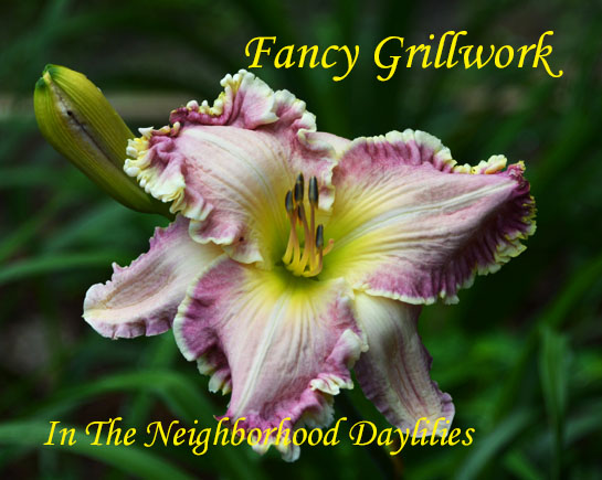 Fancy Grillwork  (Hansen, D.,  2013)-Daylily;Day Lily;Daylilies;CLICK ON IMAGE TO ENLARGE;Daylilies For Sale;Daylily Fancy Grillwork;D.Hansen 2013 Daylily;Pale Pink w'Cream Edge,Red Border & Green Throat Daylily;Reblooming Daylilies;Perennials