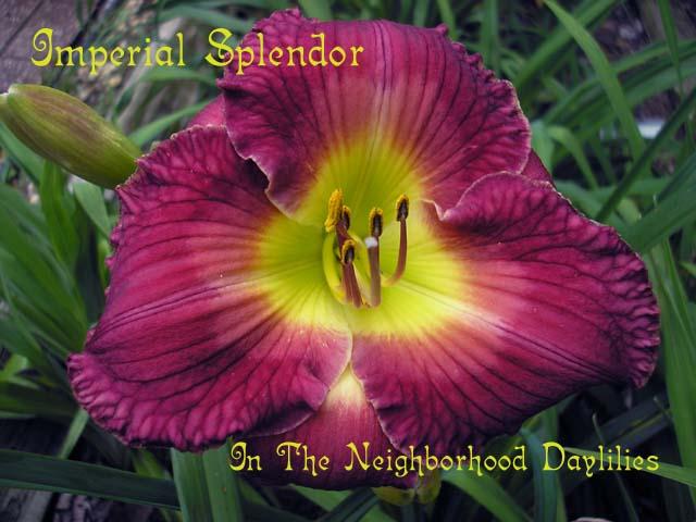 Imperial Splendor   (Salter, J., 1993)-Daylily;Daylilies;Daylillies;CLICK PICTURE;Daylily Imperial Splendor;J.Salter 1993 Daylily;Imperial Purple w' Lighter Watermark & Yellow Green Throat Daylily;Perennial Plants;Midseason Daylily;Reblooming Daylilies;Affordable Daylilies;Tetraploid Daylily;Semi-evergreen Daylily