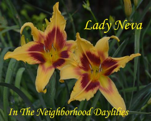 Lady Neva  (Alexander & Moody 1970)-Daylily;Daylilies;CLICK PICTURE;Lady Neva Daylily;Alexander & Moody 1970 Daylily;Soft Buff Yellow w' Rose Eye Daylily;Award Winning Daylily;Reblooming Daylilies;Unusual Form Daylily;Fragrant Daylilies