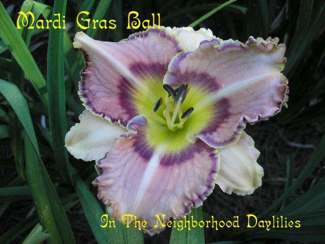 Mardi Gras Ball  (Petit, 1996)-Daylily Mardi Gras Ball;T.Petit Daylily;Lavender w' Purple Eye Daylily;Award Winning Daylily;Perennial;Midseason Daylilies;Tetraploid Daylily;Semi-evergreen Daylily