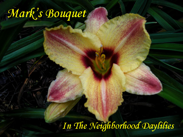 Mark's Bouquet  (Agosta  2006)-Daylily;Daylillies;Daylilies;Mark's Bouquet Daylily;Agost 2006 Daylily;Yellow Overlaid w' Red Dots & Eye Above Green Throat Daylily;Award Winning Daylily;Reblooming Daylilies;Perennials
