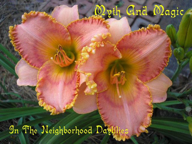 Myth And Magic   (Adams, P.,  2000)-Daylily;Daylilies;Myth And Magic Daylily;P.Adams 2000 daylily;Reblooming daylilies;Fragrant daylilies;Dormant Daylily;Midseason blooming daylily