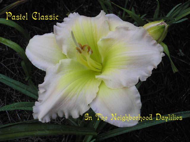 Pastel Classic  (Millikan & Soules 1985)-Daylily Pastel Classic;Millikan & Soules Daylily;Pink & Buff w' Yellow Green Throat Daylily;Award Winning Daylily;Perennial;Affordable Daylilies;Midseason Daylily;Diploid Daylily;Semi-evergreen Daylily