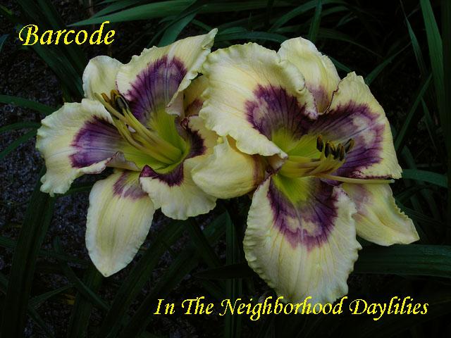 Barcode  (Stamile,  2007)-Daylily;Daylilies;CLICK ON IMAGE TO ENLARGE;Daylily Barcode;Stamile, 2007 Daylily;Cream Yellow w' Multicolored Eye Daylily;Reblooming Daylilies;Early Bloom Season Daylily;Perennial