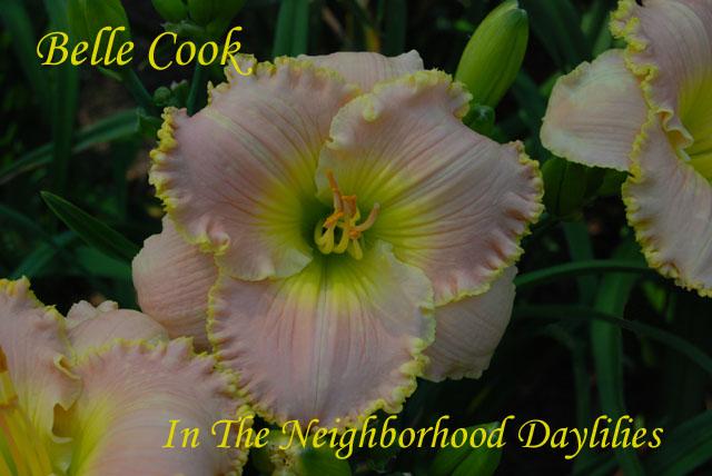 Belle Cook  (Brooker, 2001)-Daylily;Day Lily;Daylilies;CLICK IMAGE TO ENLARGE;Daylily Belle Cook;2001 Brooker Daylily;Pink Self w' Bubbly Yellow Edge Daylily;Award Winning Daylily;2001 Registered Daylily;Tetraploid Daylily;Semi-evergreen Daylily