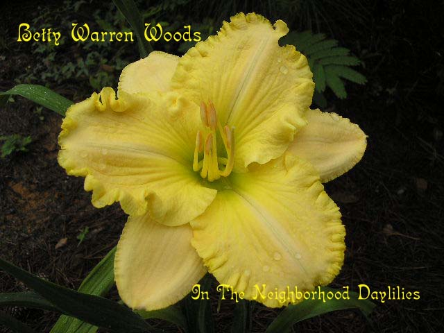 Betty Warren Woods  (Munson, R.W., 1987)-CLICK PICTURE;Daylily Betty Warren Woods;Munson Daylily;Cream Yellow w' Gold Ruffled Edge Daylily;Award Winning Daylily;Early Midseason Daylily;Reblooming Daylilies;Fragrant Daylilies;Affordable Daylilies