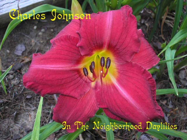 Charles Johnston  (Gates, L., 1981)-CLICK PICTURE;Daylily Charles Johnston;Lee Gates Daylily;Red Self Daylily;Award Winning Daylily;Fragrant Daylilies;Early to Midseason Daylily;Reblooming Daylilies;Tetraploid Daylily;Semi-evergreen Daylily
