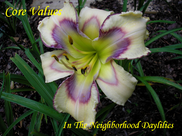 Core Values  (Hansen, D.  2011)-DAYLILY;DAYLILIES;DAYLILLIES;Daylilies For Sale;Daylily Core Values;Dan Hansen 2011 Daylily;Cream w'Lilac,Violet,Cerise,Patterned Eye w'Violet Picotee Edge Daylily;Reblooming Daylilies;