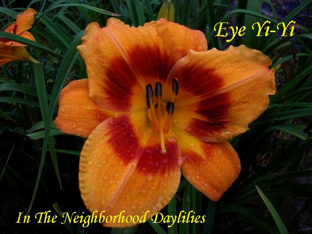 Eye Yi-Yi   (McCroskey, 1988)-CLICK PICTURE;Daylily Eye Yi-Yi;McCroskey Daylily;Bronze Bitone w' Red Eye Daylily;Award Winning Daylily;Early Season Daylily;Reblooming Daylilies;Affordable Daylilies;Tetraploid Daylily;Evergreen Daylily