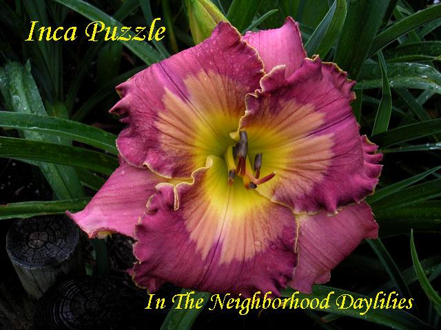 Inca Puzzle  (Petit, 2003)-Daylily;Daylilies;CLICK IMAGE TO ENLARGE;Daylily Inca Puzzle;T.Petit Daylily;Purple w' Gold Watermark & Edge Daylily;Perennial Plants;Fragrant Daylily;Midseason Daylily;Reblooming Daylilies;Tetraploid Daylily;Semi-evergreen Daylily
