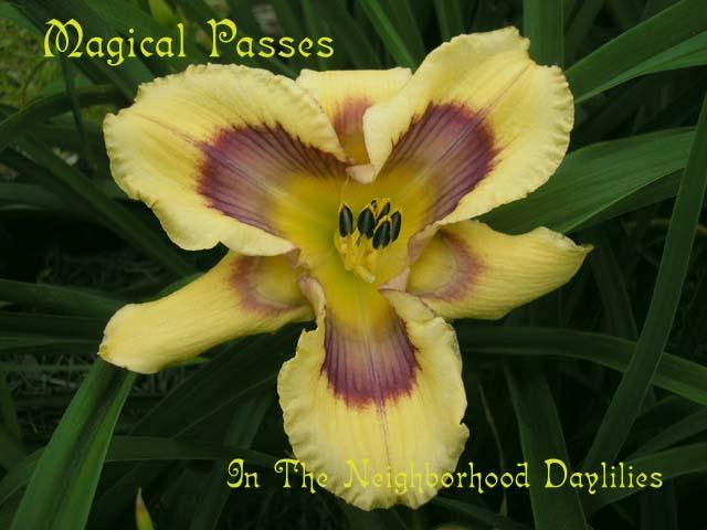 Magical Passes  (Petit, 2003)-CLICK PICTURE;Daylily Magical Passes;T.Petit Daylily;Yellow w' Burgundy Patterned Eye Daylily;Perennial;Midseason Daylily;Reblooming Daylilies;Fragrant Daylilies;Tetraploid Daylily;Semi-evergreen Daylily