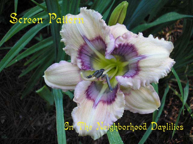Screen Pattern  (Stamile,  2005)-CLICK PICTURE;Daylily Screen Pattern;Stamile Daylily;Cream w' Multicolored Eye Daylily;Daylily Pictures;Perennials;Midseason Daylily;Dormant Daylily