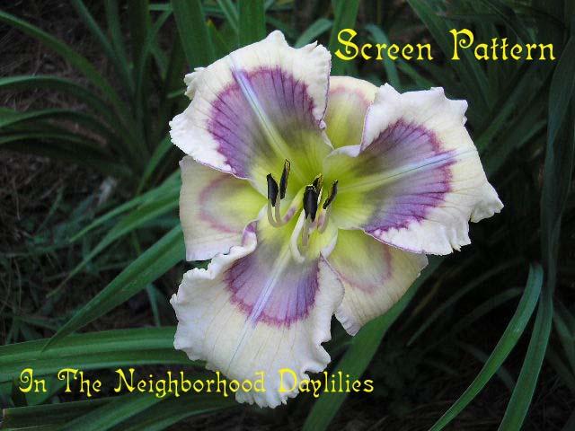 Screen Pattern  (Stamile,  2005)-CLICK PICTURE;Daylily Screen Pattern;Stamile Daylily;Cream w' Multicolored Eye Daylily;Daylily Pictures;Perennials;Midseason Daylily;Dormant Daylily