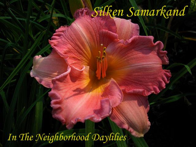 Silken Samarkand   (Billingslea, 1995)-Daylily Silken Samarkand;Billingslea Daylily;Carmine Rose Self Daylily;Daylily Picture;Perennial;Award Winning Daylily;Reblooming Daylilies;Fragrant Daylilies;Affordable Daylilies