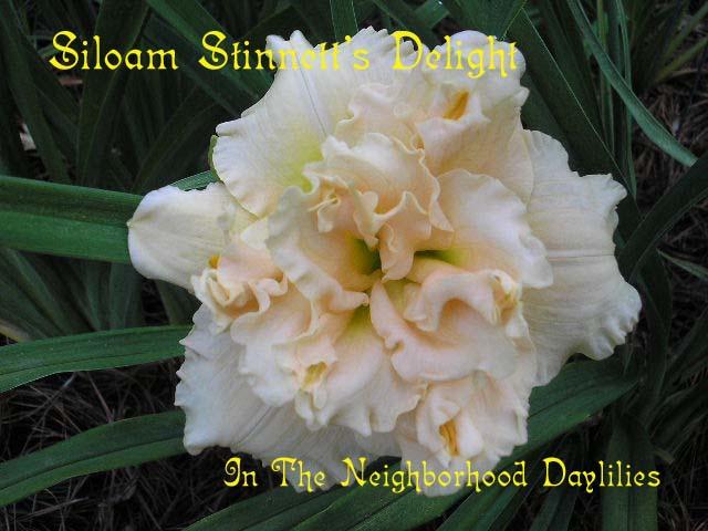 Siloam Stinnett's Delight   (Henry, P., 1992)-Daylily Siloam Stinnett's Delight;P.Henry Daylily;Light Pink w' Pink Eye Daylily;Double Daylily;Daylily Picture;Perennial;Affordable Daylilies;Fragrant Daylilies;Dormant Daylily