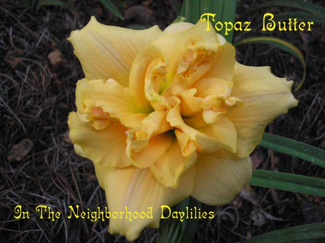 Topaz Butter   (Kirchhoff, D., 1989)-Daylily;Daylilies;CLICK ON IMAGE TO ENLARGE;Daylily Topaz Butter;D.Kirchhoff Daylily;Yellow Self Daylily;Double Daylily;Daylily Picture;Perennials;Award Winning Daylily;Fragrant Daylilies;Early Midseason Daylily